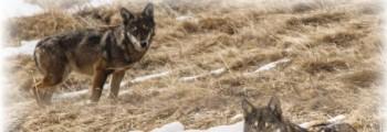 Appuntamento partecipato con i cacciatori a Piasco