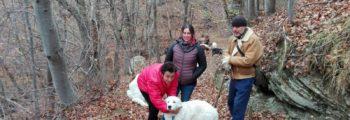 Nuovo cane da guardiania del progetto LIFE WOLFALPS affidato in Val Tanaro