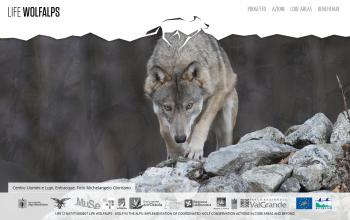 Golive di www.lifewolfalps.eu